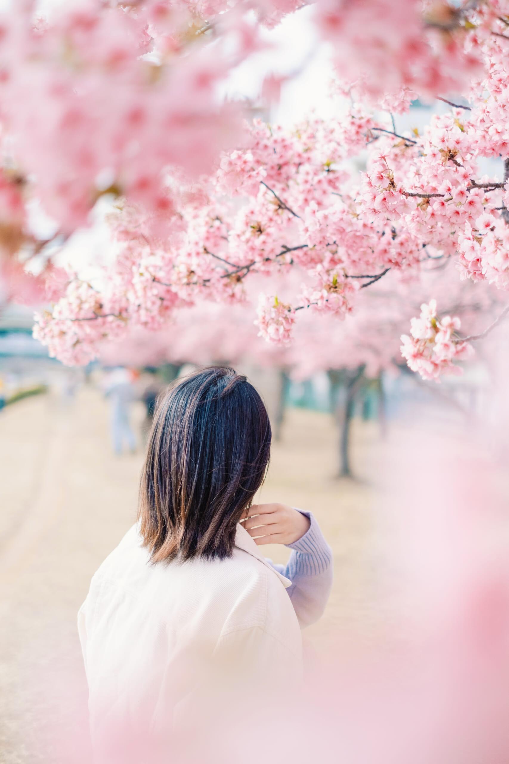 春に呼ばれた気がした。